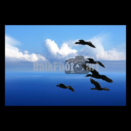 Balkphotoart Vogels