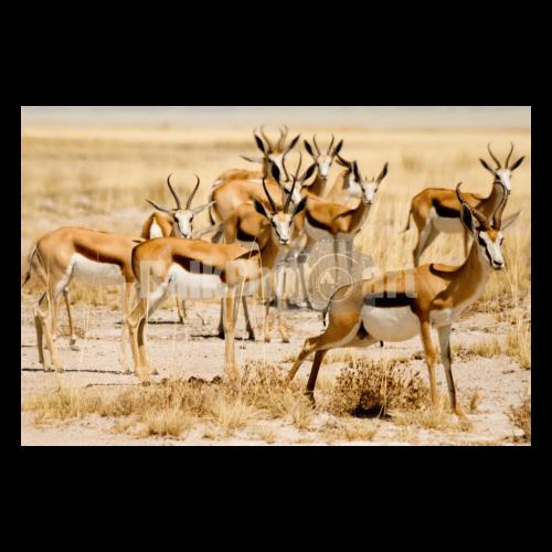 Balkphotoart Namibie